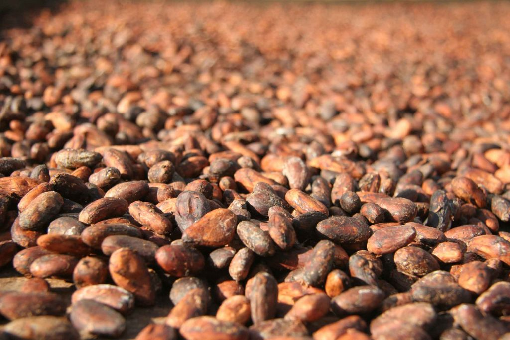 Raw, organic and fair-trade cocoa beans