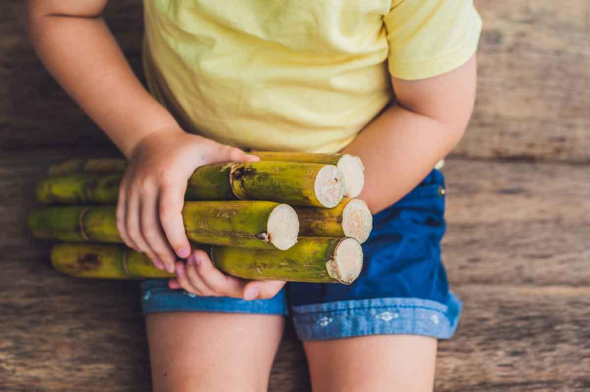 A child holding sugar cane